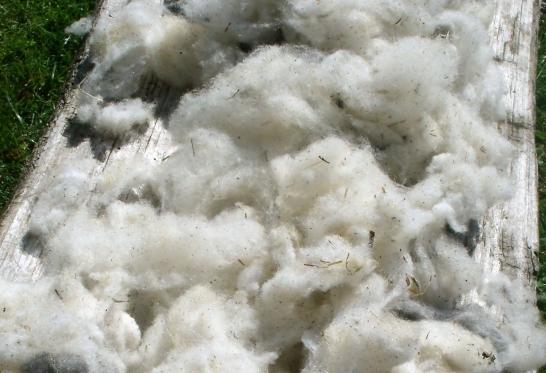 Raw wool, numb emotions.